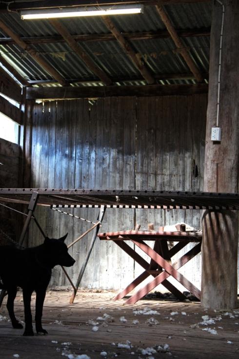 emmyandmouse-shearing-00