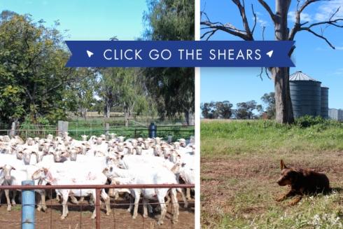 emmyandmouse-shearing-04